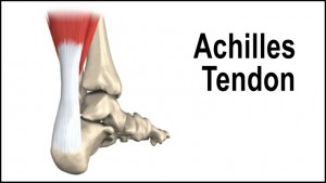 achilles-tendon3